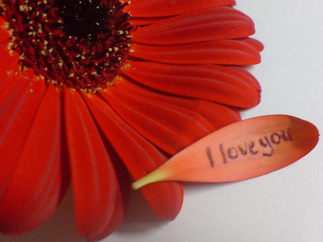 Red_Flower___I_love_you